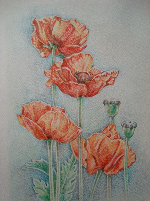 Потрясающие рисунки цветными карандашами ЦВЕТНЫЕ И