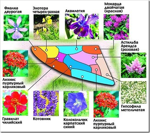 Цветы из жарких стран их фото и названия