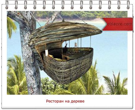 ресторан на дереве/3518263_restoran (434x352, 268Kb)