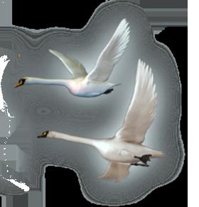 Картинка летящий лебедь анимация