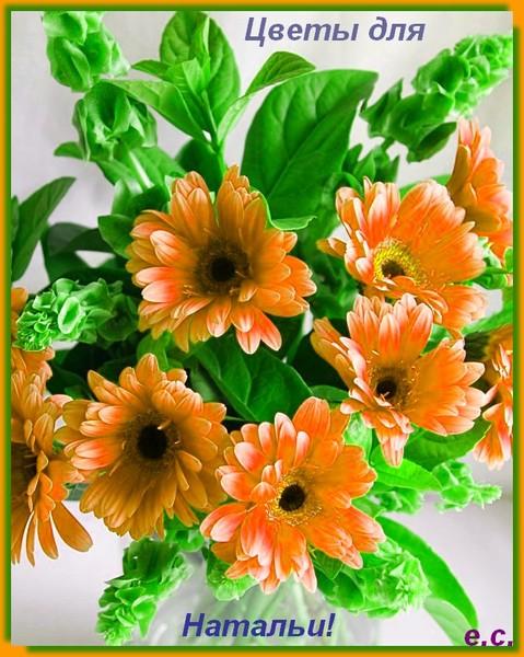 лишь самые картинка цветы для наташки перголу натянута хлопчатобумажная