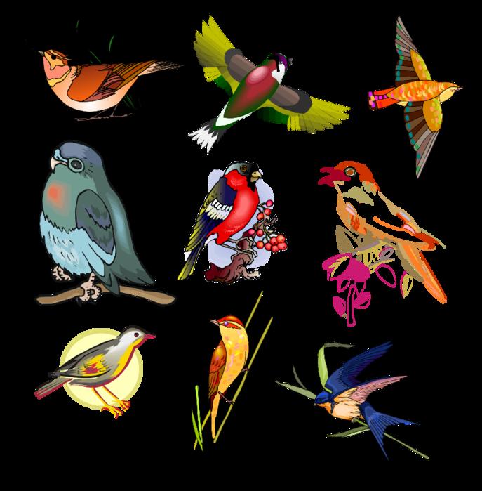 как правило, птицы на белом фоне картинки с названием радуются взрослые
