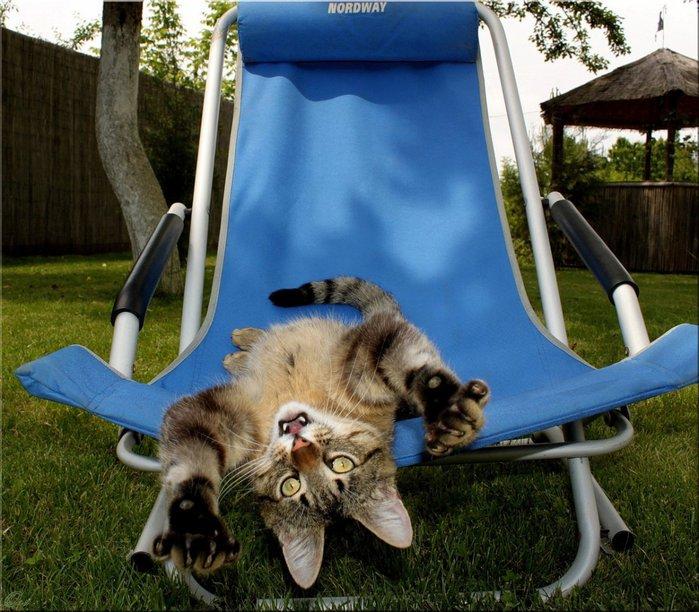 кошка отдыхает картинки прикольные утро зале для
