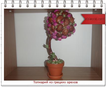 топиарий розы орех/3518263__5_ (434x352, 176Kb)