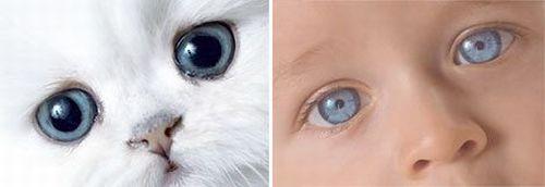 дети кошки фотографии