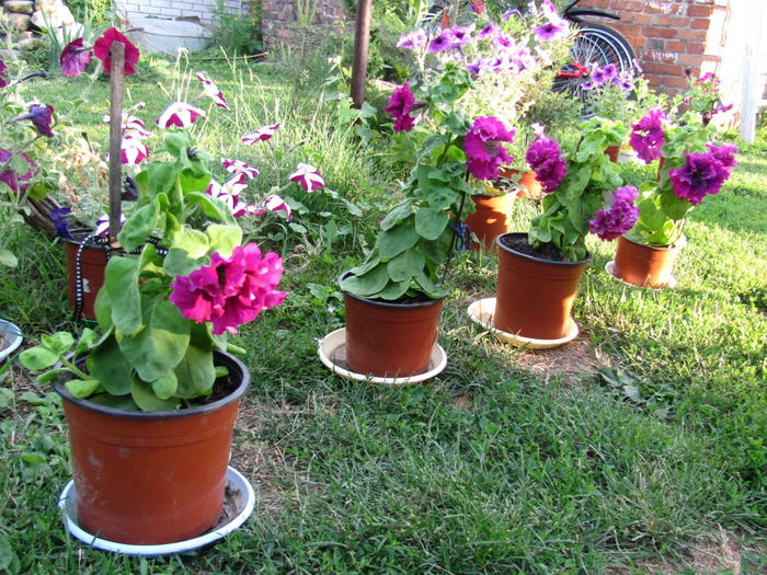 Горшки на даче для цветов фото