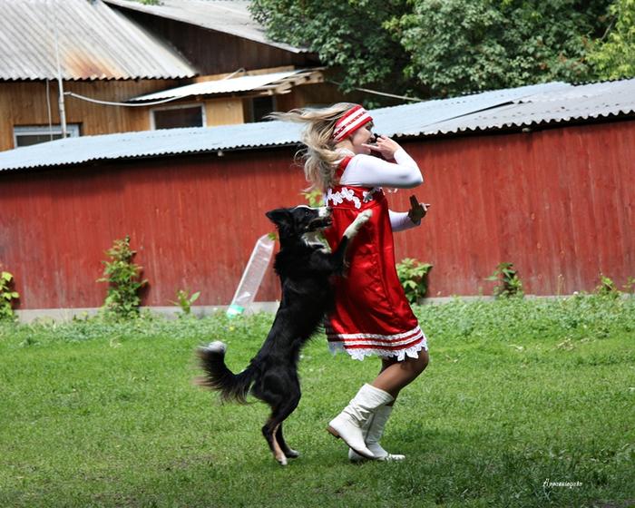 Фото собак сенбернаров самые крупные истории