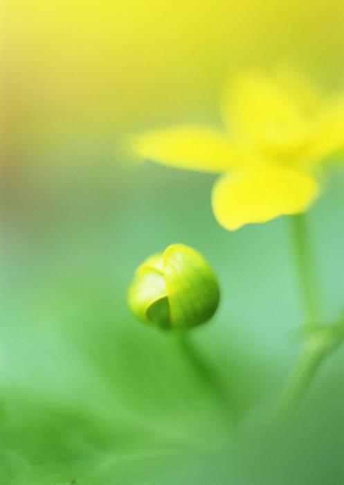 Ванильные фотографии цветов от Sozaijiten 9 (497x700, 192Kb)