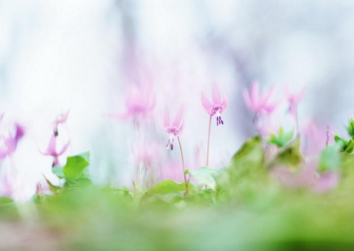 Ванильные фотографии цветов от Sozaijiten 12 (700x496, 40Kb)