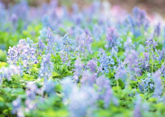 Ванильные фотографии цветов от Sozaijiten 20 (700x496, 87Kb)