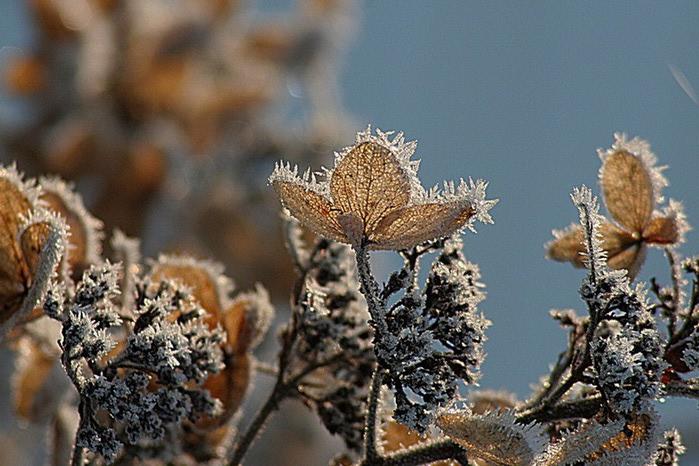 Ванильные фотографии цветов от Sozaijiten 28 (700x466, 111Kb)