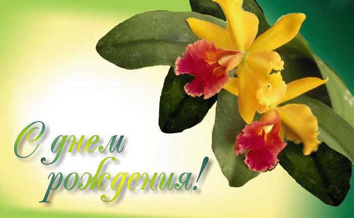 Картинки с днем рождения с орхидеями пожелания