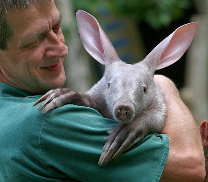 То ли свинья, то ли кенгуру, подумаете вы