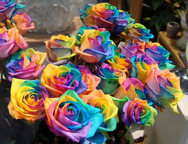 a-bunch-of-rainbow-roses-for-sale-by-Gertrud-K-620x474 (620x474, 110Kb)