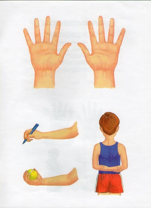 так картинки в доу по теме руками существуют вина стоющие