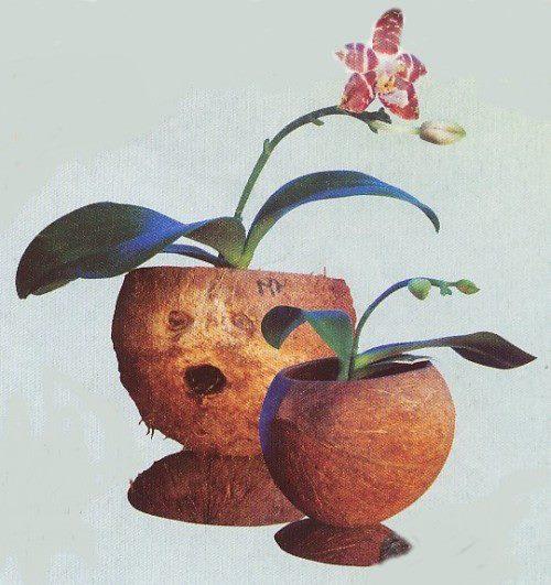 Как сделать кокос своими руками