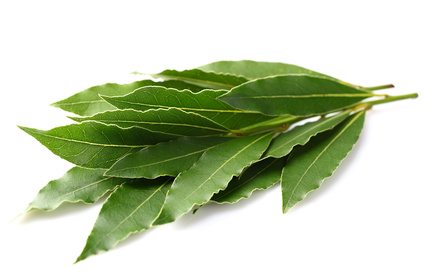 Laurel_leaves (433x277, 49Kb)