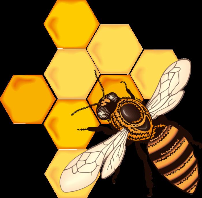 рисунок медовые соты как раз