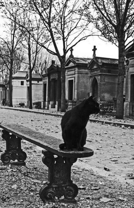 chat-cimetiere-paris (450x700, 94Kb)