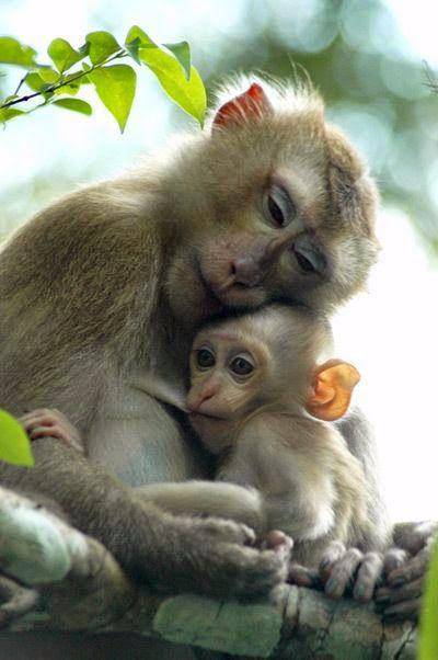 Весна и обезьяна
