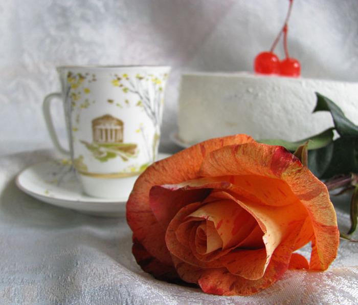 Открытка доброе утро роза, февраля поэтапно