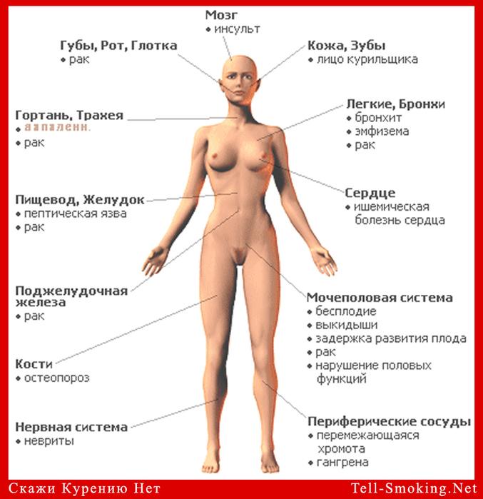 Сексуальная анатомия женщины видео