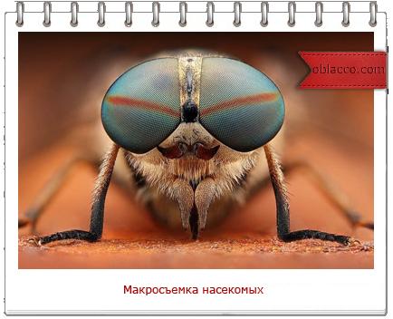 макросъемка насекомых Dusan Beno