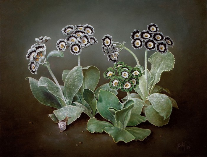 SHOW AURICULAS WITH SNAIL ON LEAF 30x41 cms Oil on canvas 1996 (700x531, 95Kb)
