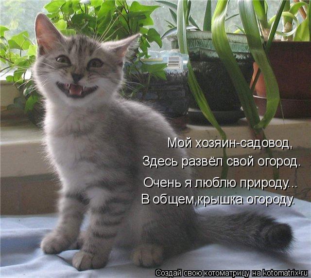 Котоматрица-2012. Выпуск 31 979157 (640x571, 67Kb)