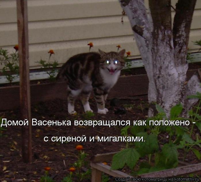 Котоматрица-2012. Выпуск 31 kotomatritsa_AV (700x632, 57Kb)