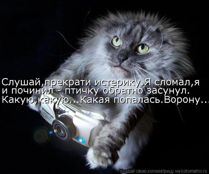 Котоматрица-2012. Выпуск 31 kotomatritsa_hV (700x584, 54Kb)