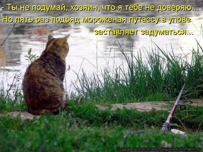 Котоматрица-2012. Выпуск 31 kotomatritsa_NI (700x523, 84Kb)