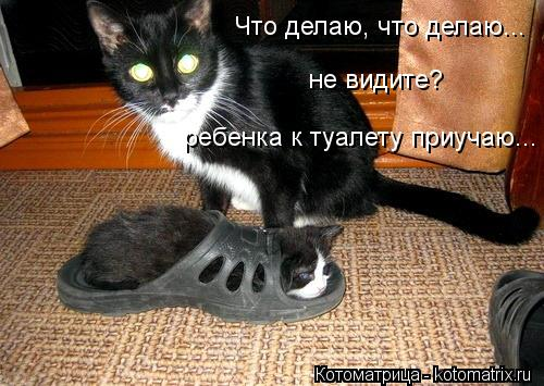 Котоматрица-2012. Выпуск 31 kotomatritsa_T9_ (500x355, 48Kb)
