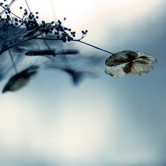 Нежное макро-фото от фотографа Tjasa Maticic 41 (700x700, 64Kb)