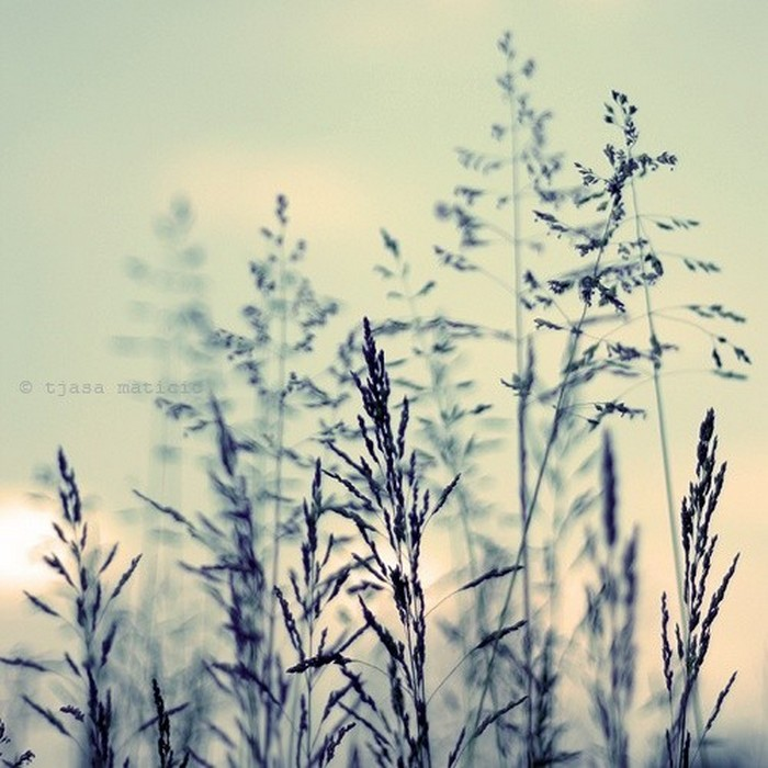 Нежное макро-фото от фотографа Tjasa Maticic 45 (700x700, 106Kb)
