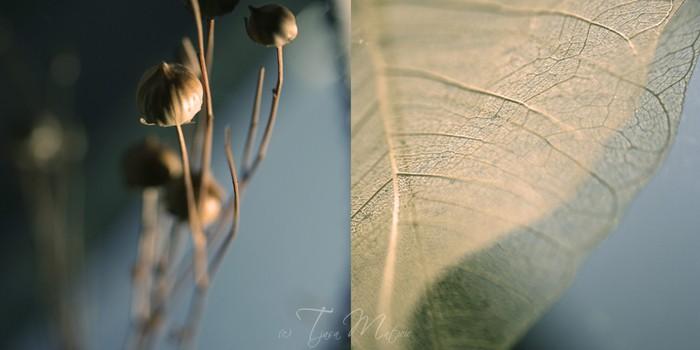 Нежное макро-фото от фотографа Tjasa Maticic 47 (700x350, 42Kb)