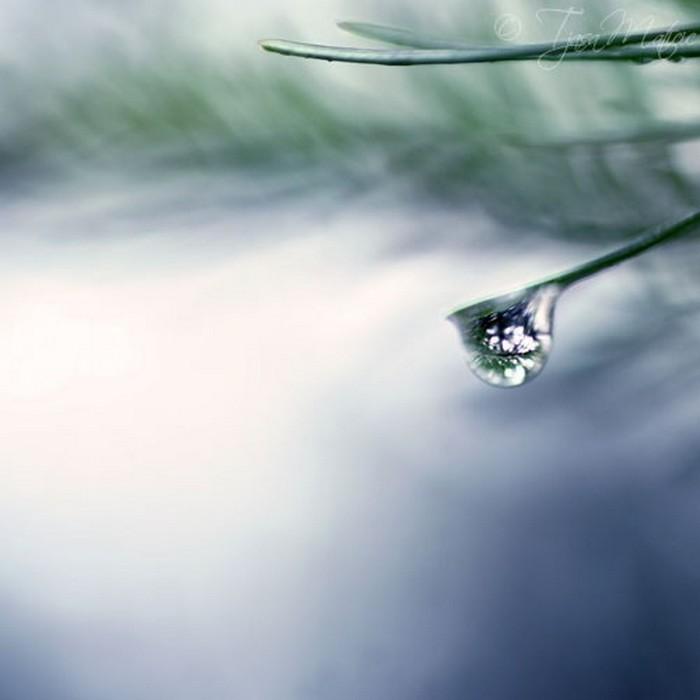 Нежное макро-фото от фотографа Tjasa Maticic 59 (700x700, 43Kb)