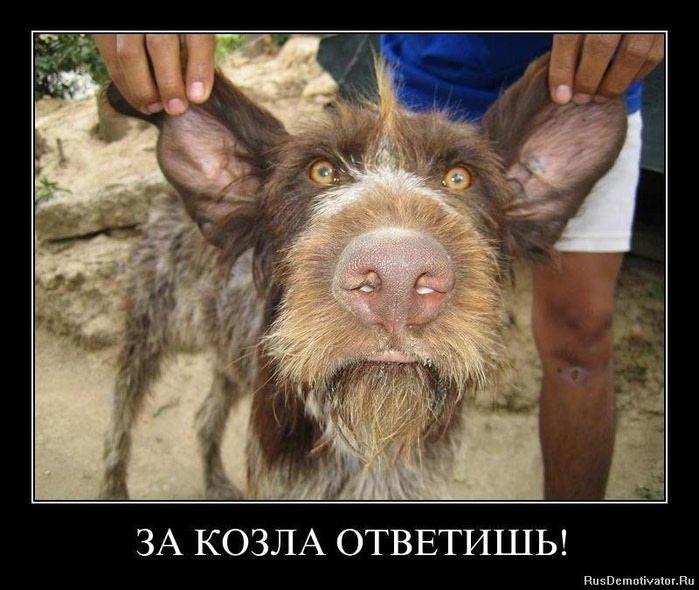 фото смешные козлы
