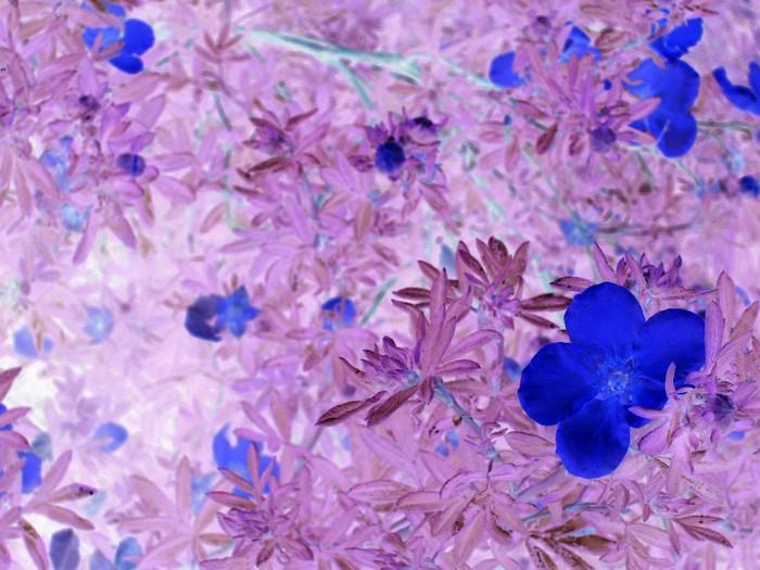 cvety (700x525, 106Kb)
