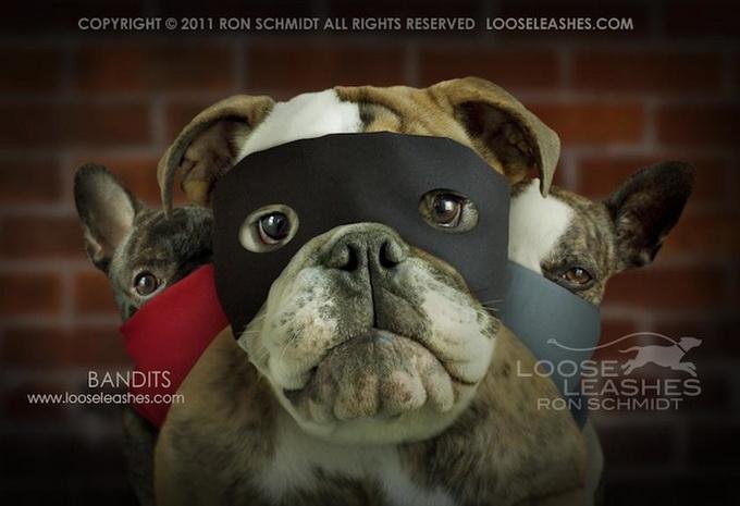 прикольные фото собак 1 (680x465, 88Kb)