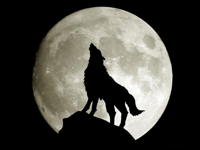 красивые фото картинки волки