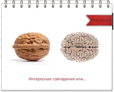 орех полезен для мозга/3518263_oreh (434x352, 111Kb)