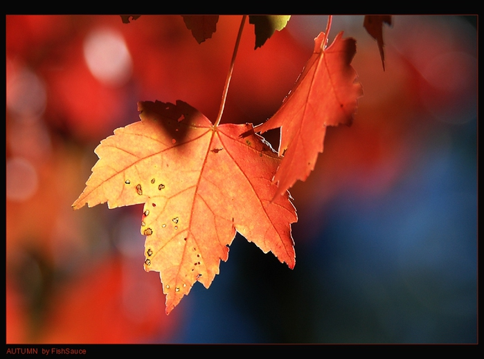 AUTUMN_LEAVES_by_FishSauce (700x519, 170Kb)