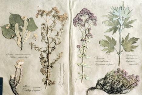 Картина из гербария 100 ПОДЕЛОК 71