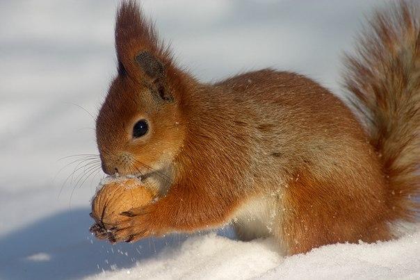красивые фото природы и животных.