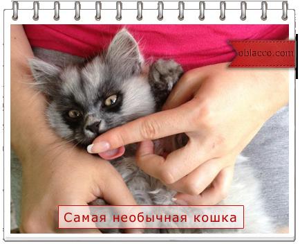Самая необычная домашняя кошка/3518263_ (434x352, 241Kb)