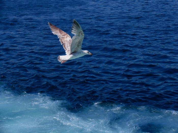 Сайтов, картинки анимации море с чайками