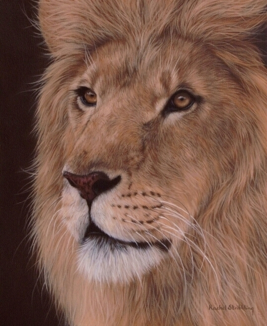 5019858_lionportrait8101_1_ (538x658, 314Kb)