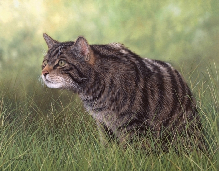 5019858_scottishwildcat1 (700x549, 307Kb)