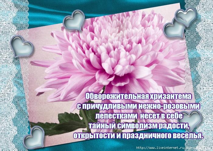 Стихи про хризантемы осенью
